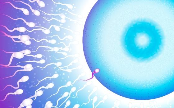 Εξωσωματική Γονιμοποίηση με Ήπια Πρωτόκολλα Ελεγχόμενης Διέγερσης Ωοθηκών | Δρ Γεώργιος Μπάσιος - Μαιευτήρας Χειρουργός Γυναικολόγος